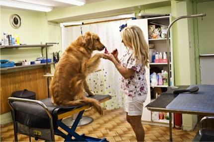 Adorable Animal dog grooming
